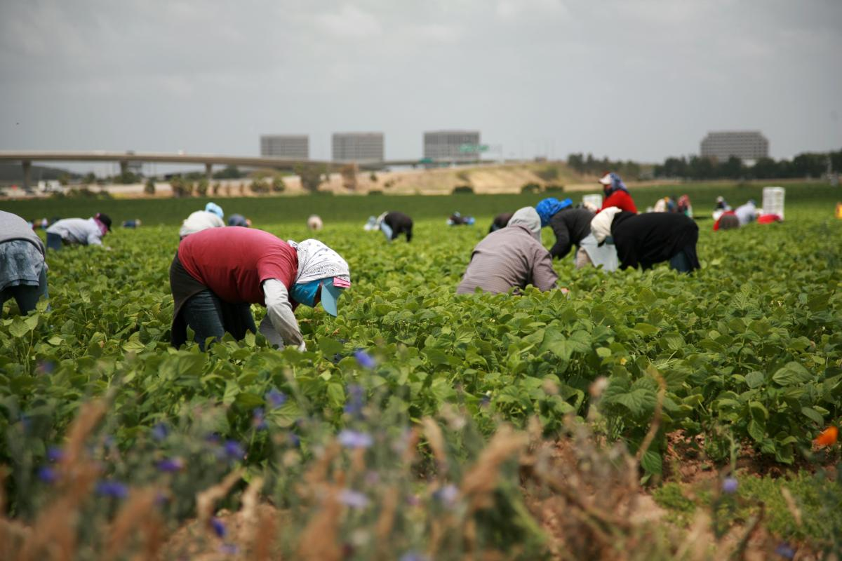 Protecting Idaho S Seasonal Agricultural Workers Boise State Public Radio