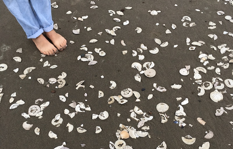 Why Are There So Many Sand Dollars On Ocean Beach Kalw