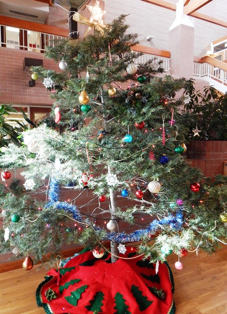 Prescott National Forest Christmas Tree Permits 2021 Christmas Trees Provide Opportunities For Thinning N Ariz Forests Knau Arizona Public Radio