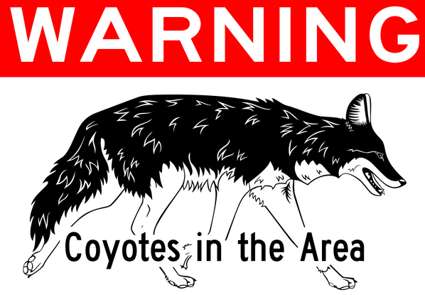 Coyotes Have City On Alert | WAMC