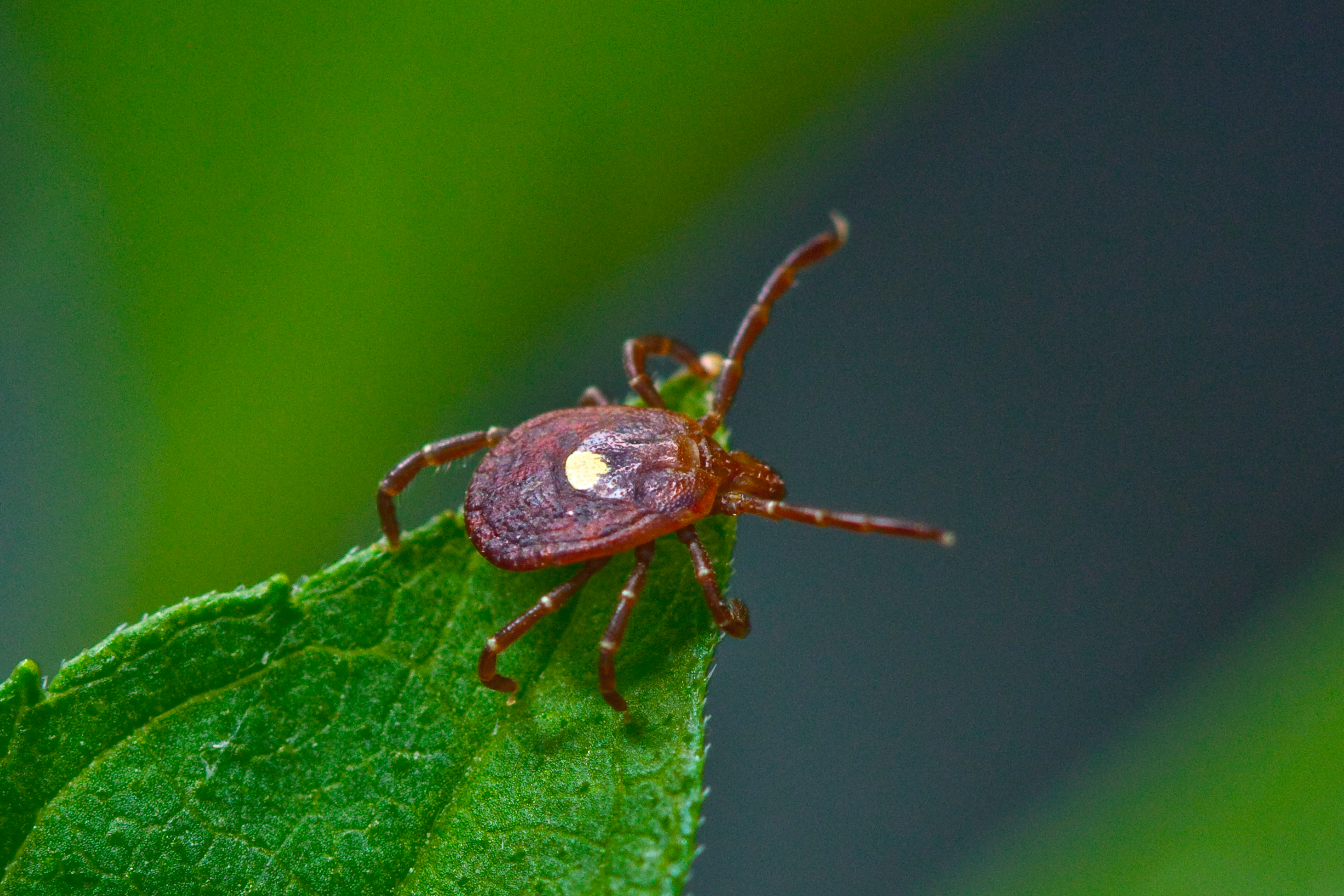 Florida Sees Big Jump In Reported Lyme Disease Cases | WJCT NEWS
